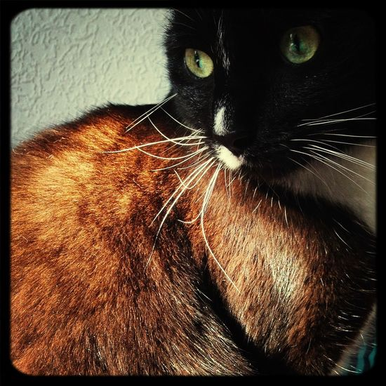 Cat Favorite Art Light And Shadow Enjoying Life