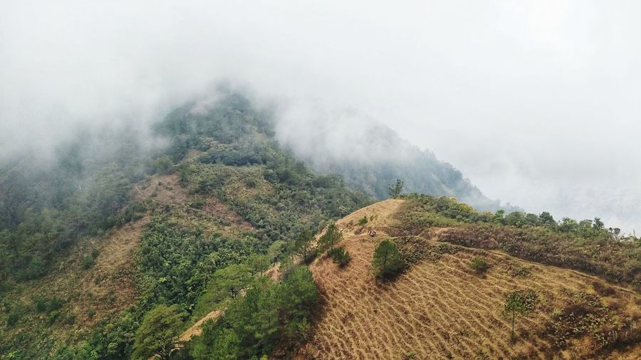 Hiking Hiker Nature Camping Path Mountain Range Mountain Pathway Close-up Greenery Tea Crop Water Tree Rural Scene Fog Agriculture Irrigation Equipment Sky Landscape