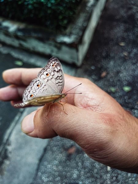 Thank U Little Guy Cute Butterfly Suddenly Interesting Moment Feel Great  Natural My Hand  Close-up In The Park