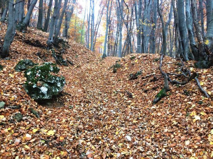 Autumn First Eyeem Photo