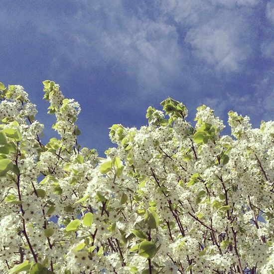 Blossoms and blue sky :-)