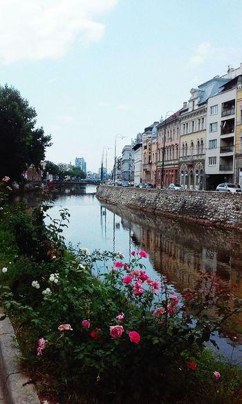 Sarajevo Bascarsija Roses River Miljacka Bridge Beautiful