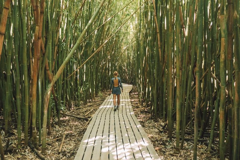 Rear View Full Length Of Woman Walking Amidst Bamboo Plants On Footpath