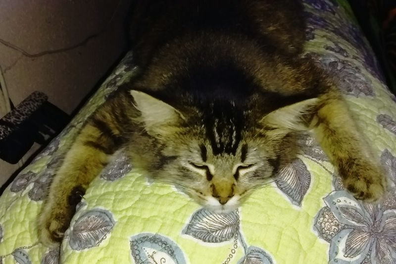 Sleepykitty Hanging Out Relaxing Enjoying Life Kittys  Texas Shopkittys Catlovers Awesomeness