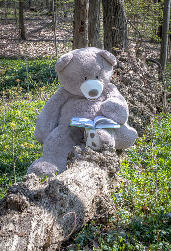 Close-up of stuffed toy on tree trunk in field