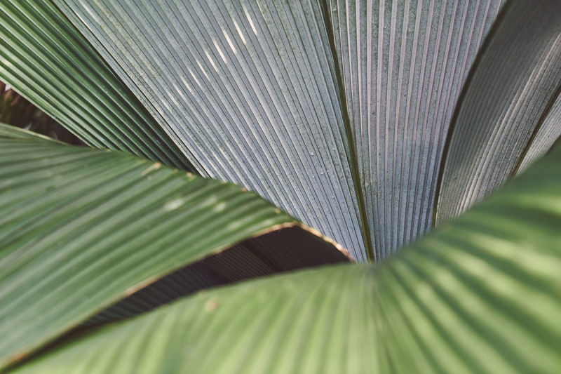 Spring in Kew Spring Springtime Spring Flowers spring into spring Spring Has Arrived Leaf Plant Part Green Color Plant Close-up Beauty In Nature Natural Pattern Backgrounds Full Frame No People Palm Leaf Nature Palm Tree Pattern Day Outdoors Tropical Climate Tree Freshness Leaves