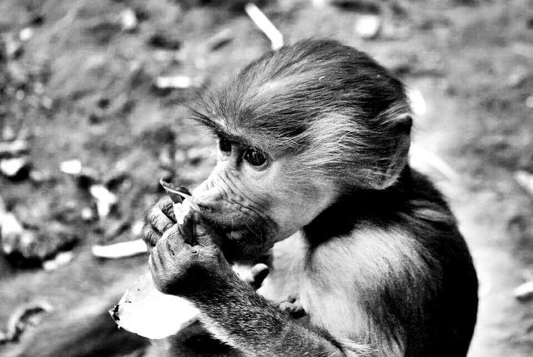 Monkey Lovethis Photooftheday Nikonphotography Blackandwhite