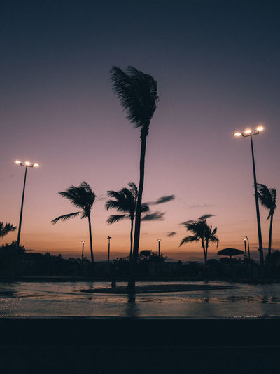 Street Light Palm Tree Sky Tropical Climate Tree Silhouette Plant Sunset No People Lighting Equipment Nature Illuminated Dusk Scenics - Nature Beauty In Nature Tranquil Scene Tranquility City Tropical Tree Outdoors Australia