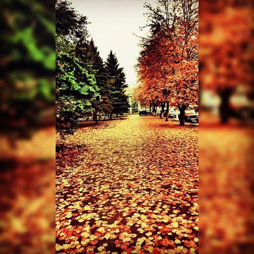 Азов осень листья деревья дорога тротуар небо елки ель ветви ветки Azov fall autumn trees sky leaves branches road pavement firtrees mixapp mix4ins Squaredroid