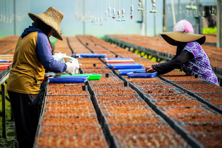 Two women work with seeds to plant at nursery gardenAgriculture Farmer People Working Occupation Real People Women Two People Rural Scene Forestry Landscape Nature Human Interest Indonesia Human Interest Plant Life Planting Planting Seeds Plant Nursery Garden Mix Yourself A Good Time