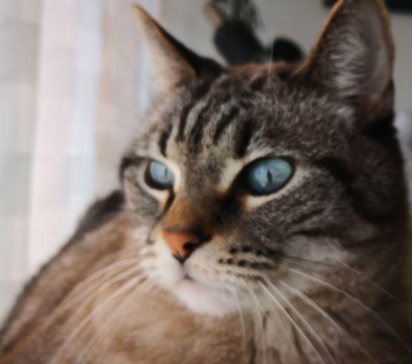 mishou♥️ Pets Portrait Feline Domestic Cat Looking At Camera Whisker Kitten Close-up