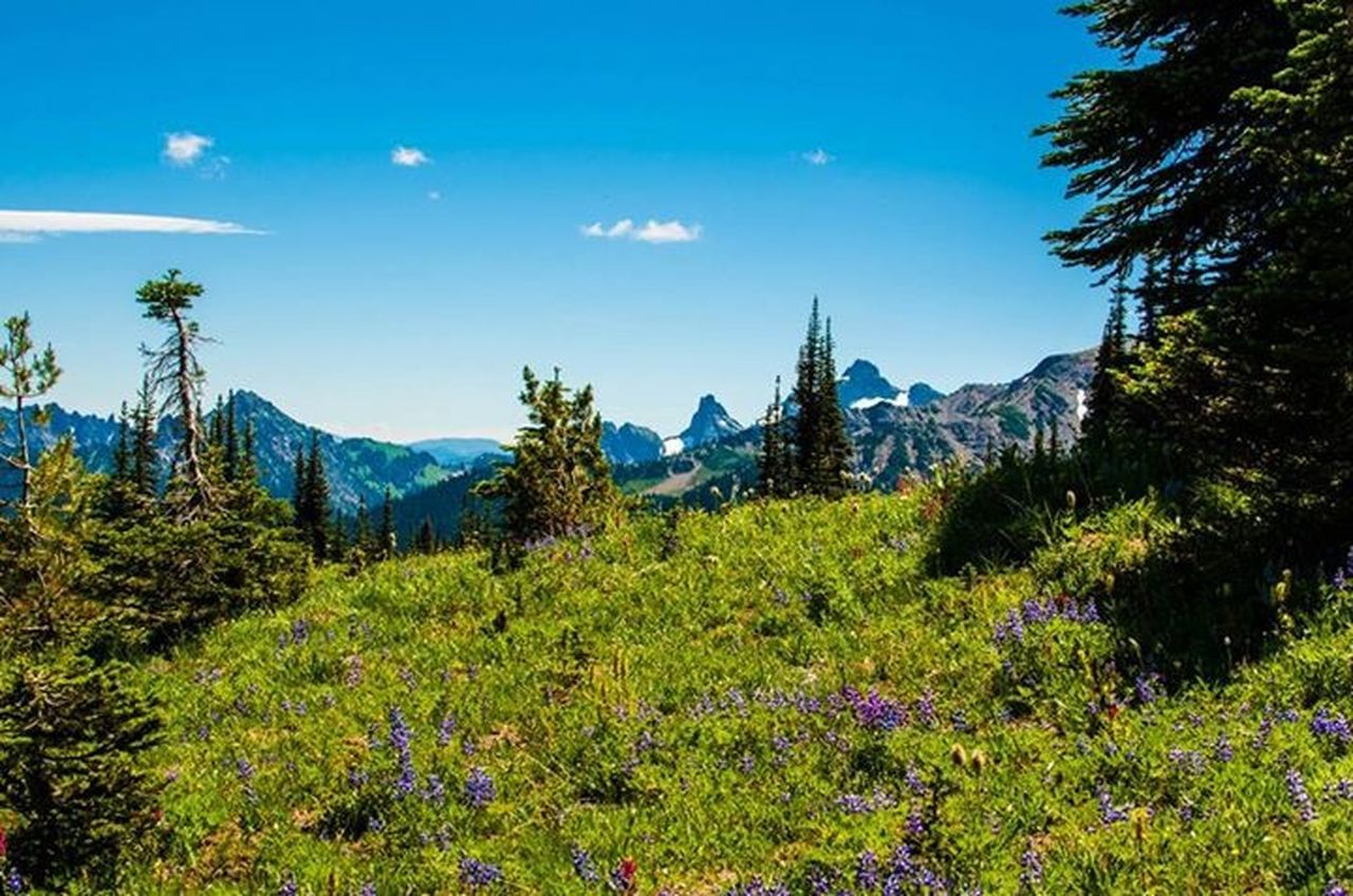 mountain, tree, nature, scenics, beauty in nature, tranquil scene, mountain range, landscape, tranquility, day, growth, plant, no people, outdoors, sky, forest, blue, adventure, flower
