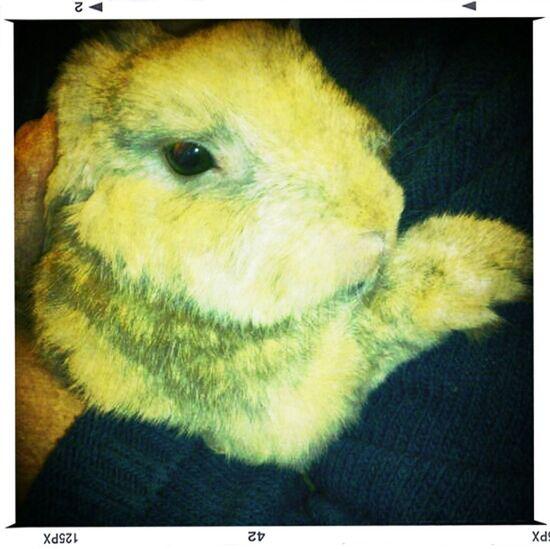 Rabbit Bunny  Hugging Conill Conejo Abraçada Kanijn