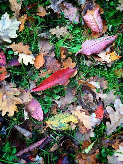 Good Morning Greenery EyeEm Nature Lover Autumn🍁🍁🍁 Autumn Leaves Urban Nature Autumn Colors Leaves Autumn