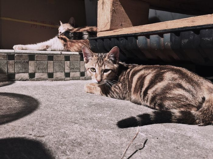 Cat sitting outdoors
