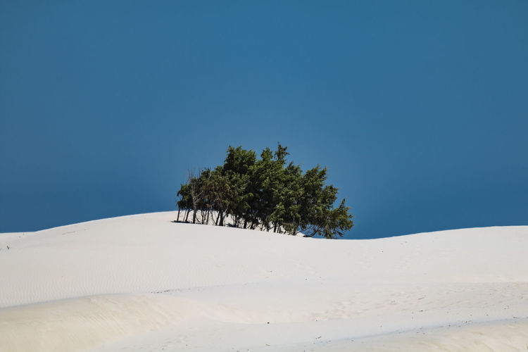 Trees On Shore Against Blue Sky Beauty In Nature Blue Clear Sky Dune Landscape Nature Nature Nature Photography Nature_collection No People Sand Sand Dune Single Tree Snow Tranquil Scene Tree Tree Trees Trees And Sky Treescollection