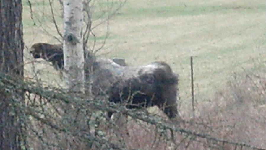 In The Field Breakfast Moose baby