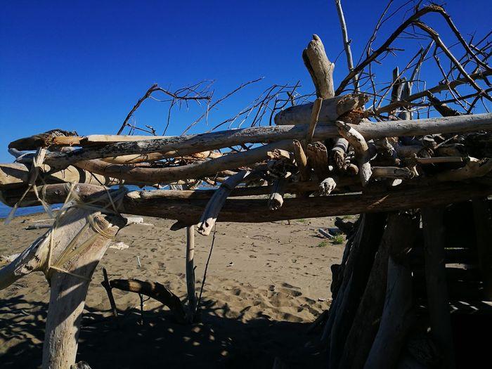 le capanne Beautiful Colors Cuore Della Maremma Contemplazione Alone Tree Tranquility Spiaggia🐚 Spiaggia Selvaggia My Point Of View Nature EyeEm Nature Tree Beach Clear Sky Blue Water Sky