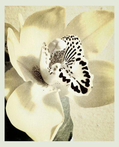 Orchid Edit Junkie