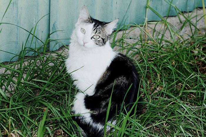 Cat in the grass Cat In Garden Grass