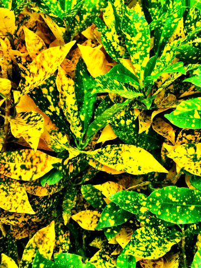 Leaves Textures