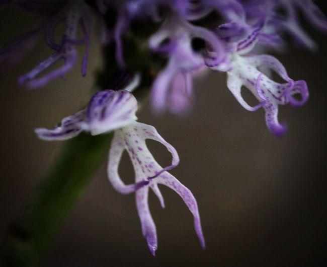 orquídeo y