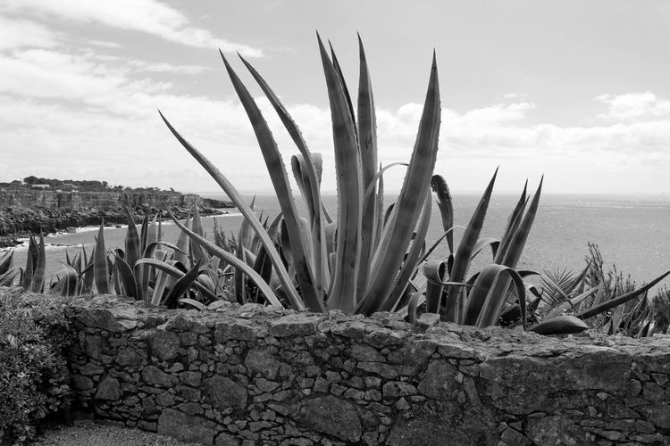 Seaside Landscape Black & White Bnw Black And White EyeEm Blackandwhite Blackandwhite Photography Greenery Eye4photography  EyeEm Best Shots EyeEmBestPics Plants And Flowers Sky And Clouds EyeEm Nature Lover Stone Wall Cliff Cliffside EyeEm Gallery Taking Photos Portugal