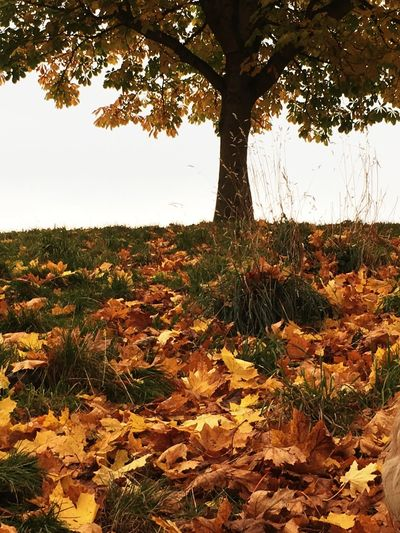 Season of mists and golden leaves Hugging A Tree Relaxing Scotland EyeEm Nature Lover Earth Leaves Autumn Melancholic Landscapes Nature Nature Photography