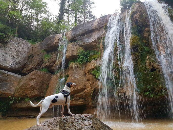 Agua lenta. Animal Themes Water Nature Agua,nature,water
