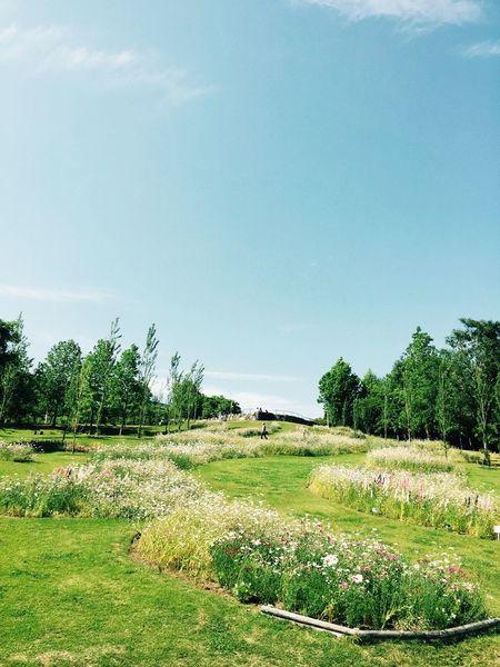 Flesh Grass Grassyfield The Grass Is Green Nature Beautiful Nature Park Parks