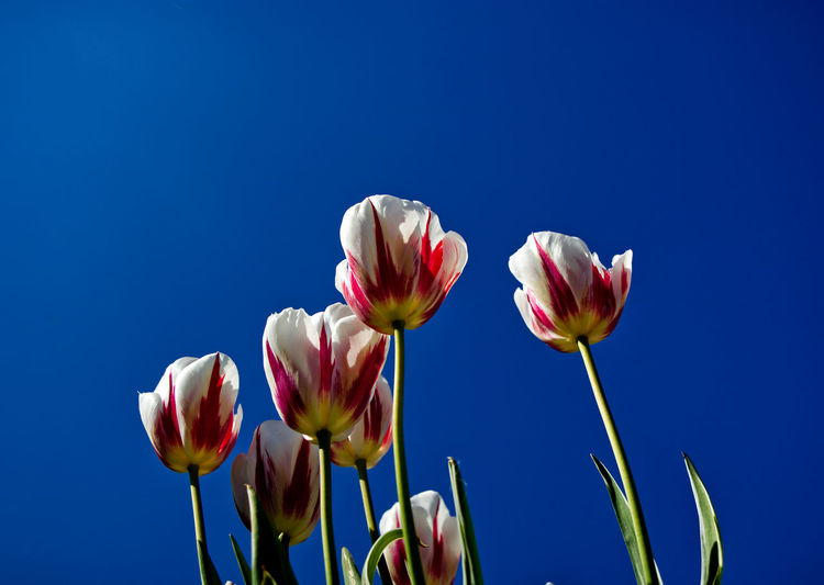 Close-up of flowering plants against blue sky