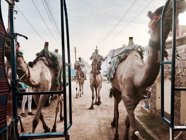 Running Camels Nubia Egypt Travel Riding Driving Road Trip Road Camels Travel Camels Camel Horse Domestic Animals Animal Themes Built Structure Mammal Sky Outdoors Day No People