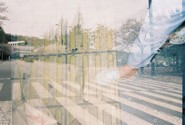 35mm Analogue Photography Cherry Blossoms Day Double Exposure Film Film Photography Korea South Korea