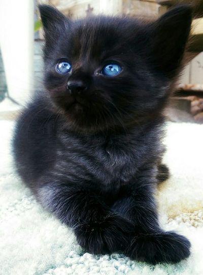 Socute kitty Shopkittys Flipsiderestoreation