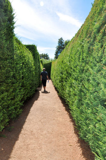 Tourist walking through the manicured hedge maze at Amaze'n Margaret River in Western Australia. Amaze'n Margaret River Botanical Gardens Challenge Clouds Footpath Fun Garden Green Color Growth Hedge Lost Margaret River Region Maze Nature Outdoors Path Person Real People Shrub Sky Sunlight The Way Forward Tourist Attraction  Walking Western Australia