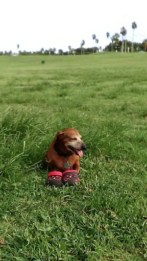 Pet Photography  Green Color Grass Pets Corner Pet Love Shoes Of The Day Domestic Animals Parksandrecreation EyeEmBestPics Outdoors Outdoor Photpgraphy Park View Pet Of The Day