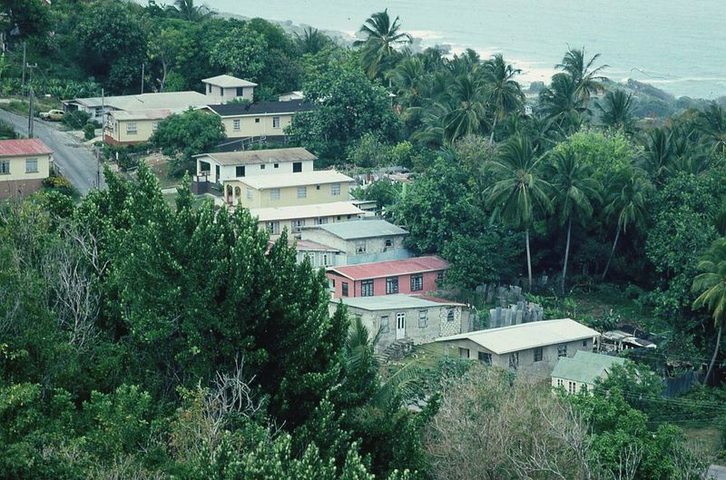 High angle view of trees and houses