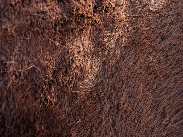 Focus to hairs direction in the horse fur. brown horse spring skin after brushing of warm winter fur