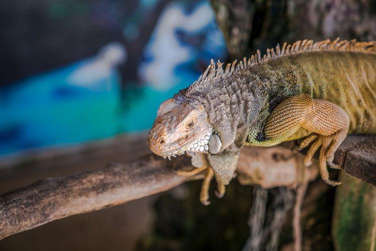A lizard that crawls on bali
