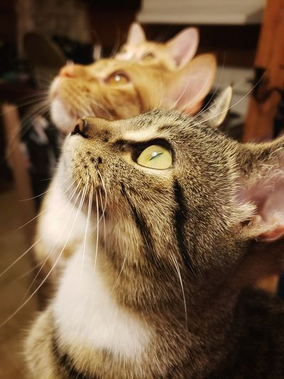 Close-up of a cat looking up