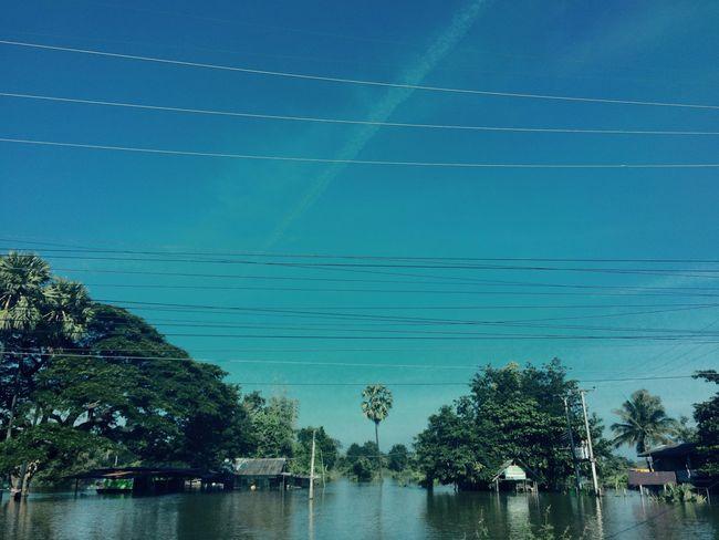 View Flood Waters  Tree