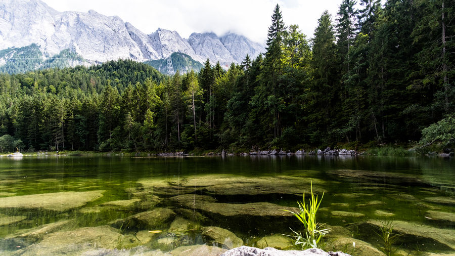 Lake Frillensee with the mountains Wettersteingebirge Bavaria Eibsee Fresh On Eyeem  Frillensee Mountain View The Week On EyeEm Under Water Wettersteingebirge Zugspitze Beauty In Nature Grass Lake Mountain Nature No People Outdoors Scenics Sky Tranquil Scene Tranquility Tree Water Your Ticket To Europe Been There. An Eye For Travel