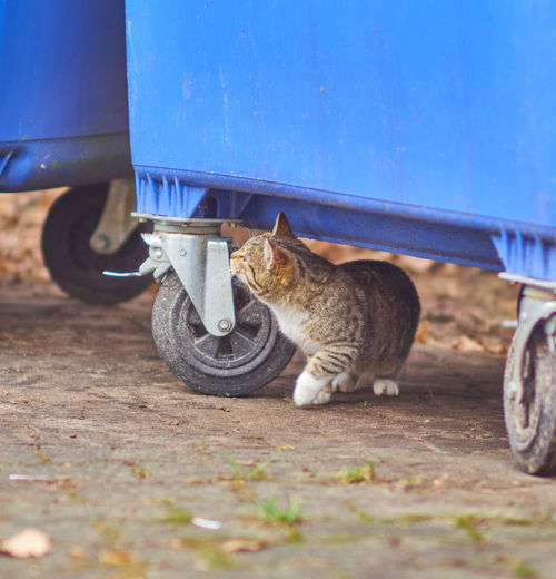 Cute cat Animal Themes Blue Cat Container Cute Day Domestic Animals Domestic Cat Feline Garbage Ginger Cat Mammal No People One Animal Outdoors Pets Rubbish Stationary Tabby Cat First Eyeem Photo