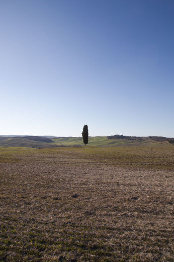 Sky Landscape Land Environment Field Nature Scenics - Nature Tranquil Scene Outdoors Clear Sky Copy Space Horizon Over Land Day Horizon Tranquility Blue Beauty In Nature Plant No People Grass Crete Senesi Pienza Val D'orcia Tuscany Tuscany Hills Tuscany Countryside Cypresses Road