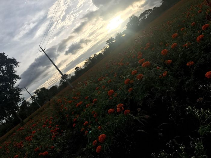 Flower Farm Gundalpet Seasonal First Eyeem Photo