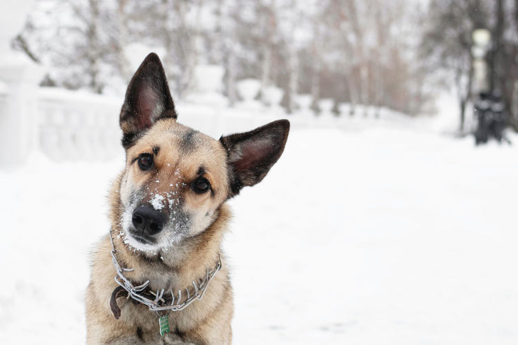 Portrait of dog on snow field