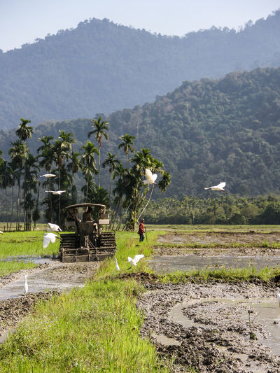 on job with nature Agriculture Asian Style Conical Hat Beauty In Nature Day Farm Farmer Field Grass Growth Irrigation Equipment Landscape Mountain Mountain Range Nature Occupation One Person Outdoors Real People Rice - Cereal Plant Rice Paddy Rural Scene Scenics Tranquility Tree Working