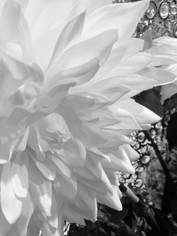 أنا الأبيض إذا غيري تلّون 👋🏻👌🏻 Plant Growth Beauty In Nature Flower Flowering Plant No People Fragility Nature Outdoors Flower Head Freshness