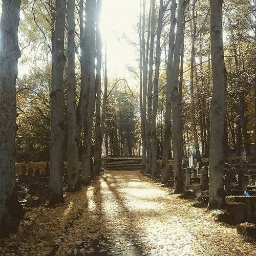 Sopot Cmentarz Jesień Ilovesopot Instanature