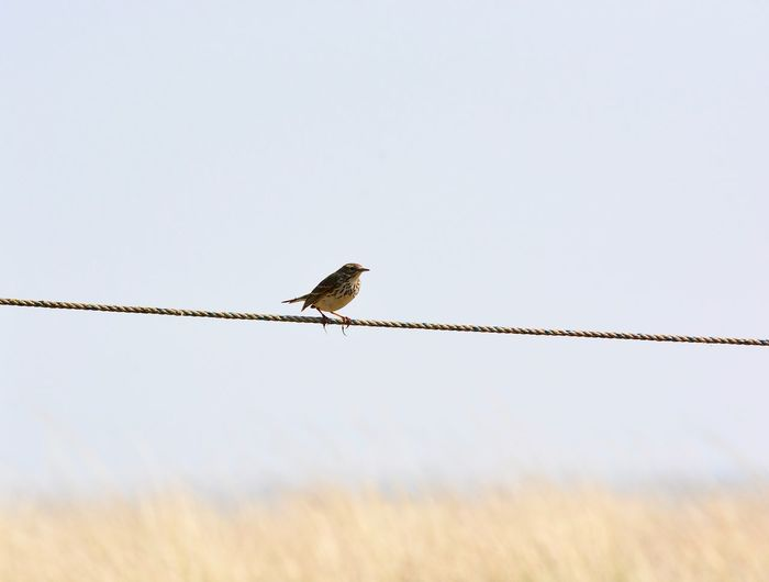 Bird On A Wire Sky Background Beautiful Nature Beautiful Day Bird Photography Showcase April Springtime Nature Photography Dunes Of Holland